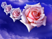 Pink roses in the sky Royalty Free Stock Image