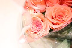 Pink roses for special day stock photography