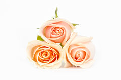 Pink roses stacked on white. Three stacked pink roses in soft out of focus on a  white isolated background Stock Images