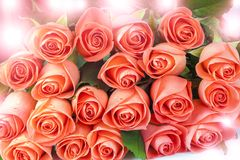 Pink roses with sunspots. Fresh pink roses with sunspots and sunlight Royalty Free Stock Photo