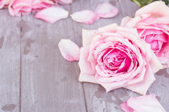 Pink roses on table Stock Images