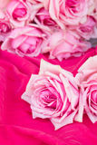 Pink  roses  on table Stock Photo