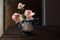 Pink roses in teapot on grunge background Stock Image