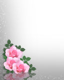 Pink Roses template Royalty Free Stock Photography