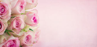Pink roses with copy space Stock Photos