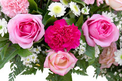 Pink roses to decorate Stock Photography