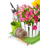 Pink roses and tulips with garden tools Royalty Free Stock Photos