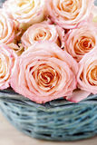 Pink roses in turquoise wicker basket Royalty Free Stock Photos