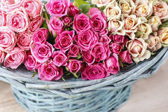 Pink roses in turquoise wicker basket Royalty Free Stock Images