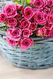 Pink roses in turquoise wicker basket Stock Image