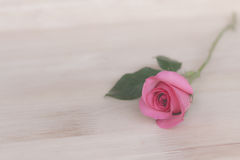 Pink roses in valentine day, romantic background & x28;vintage effect Royalty Free Stock Photo