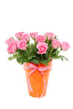 Pink roses in a vase Stock Photography