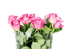 Pink roses in vase isolated on white background Stock Photography
