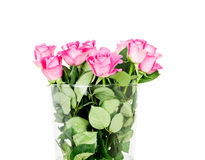 Pink roses in vase isolated on white background Stock Images