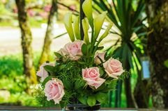 Pink roses in a vase Royalty Free Stock Image