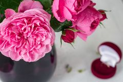 Pink roses in a vase. royalty free stock images