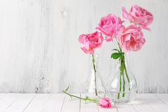Pink roses in vases Stock Photos