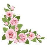 Pink roses. Vector corner background. Stock Photos
