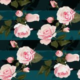 Pink roses vector seamles pattern. Realistic flowers on stripes background, floral texture royalty free illustration