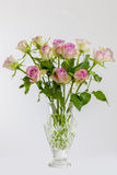 Pink Roses. View of a vase of pink roses on a white background Royalty Free Stock Image