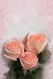Pink roses on vintage background Royalty Free Stock Photos