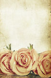 Pink roses on vintage background Stock Photos