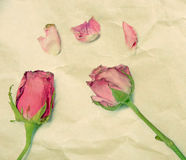 Pink roses on vintage paper background Royalty Free Stock Image