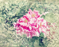 Pink roses in vintage style Royalty Free Stock Images