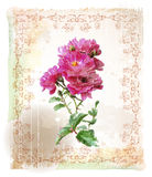 The pink roses Stock Images
