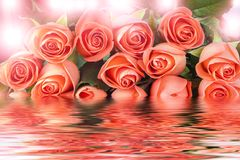 Pink roses in water Stock Image