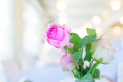 Pink roses in water glass on white table. Pink roses in water glass on white Royalty Free Stock Photo