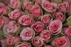 Pink roses in a wedding arrangement Stock Image