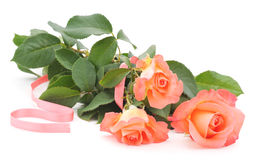 Pink roses. Royalty Free Stock Photo