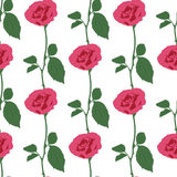 Pink roses on the white background Royalty Free Stock Photos
