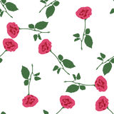 Pink roses on the white background. Royalty Free Stock Image
