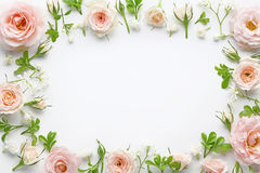Pink roses. On white background Royalty Free Stock Photos