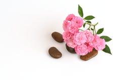 Pink roses. Royalty Free Stock Photos