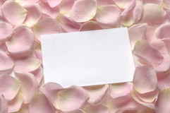 Pink roses with White blank note Royalty Free Stock Photos