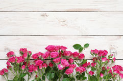 Pink roses on white. Crimson and pink spray roses on shabby white wooden background. Top view point Royalty Free Stock Photography