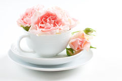 Pink roses in a white cup Stock Photography