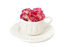Pink roses in a white cup Royalty Free Stock Photography
