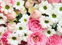 Pink roses and white daisy flowers bouquet Royalty Free Stock Photos