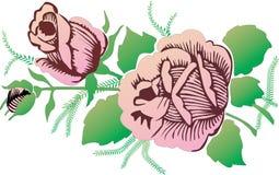 Pink roses on white illustration Stock Photos