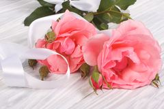 Pink roses with a white ribbon Stock Photos