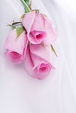 Pink roses on white silk Royalty Free Stock Photo