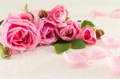 Pink roses on white silk textile Stock Image