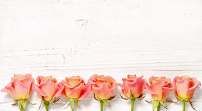 Pink roses on white wood background Royalty Free Stock Images