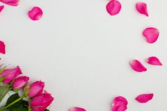 Pink roses on a white wooden background. With copyspace Royalty Free Stock Photos