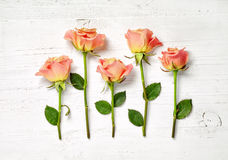 Pink roses on white wooden background Stock Images