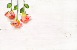Pink roses on white wooden background Royalty Free Stock Image